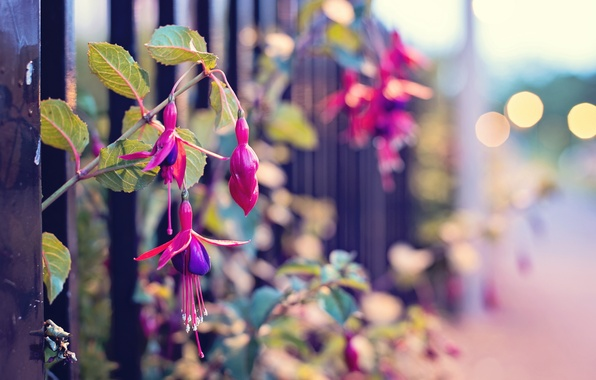 Picture macro, flowers, street, the fence