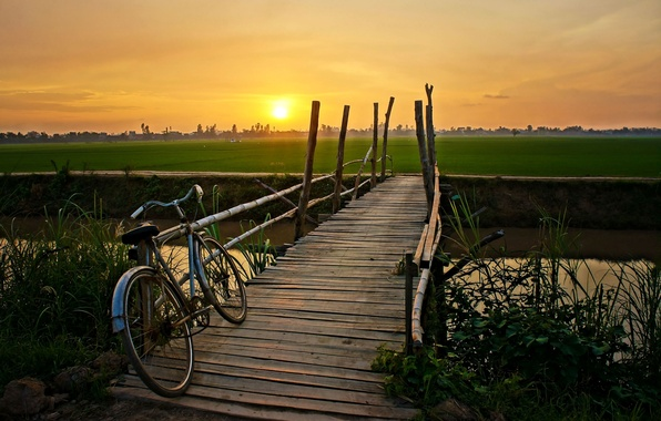 Picture greens, field, the sky, leaves, water, the sun, trees, sunset, bridge, bike, lake, river, background, …