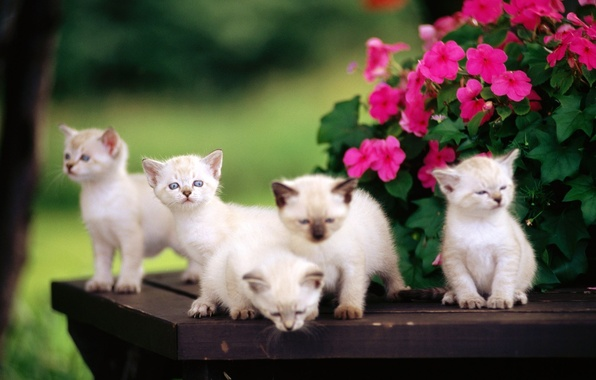 Picture flowers, kittens, kids