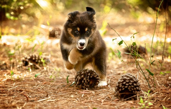 Picture nature, dog, puppy, bumps