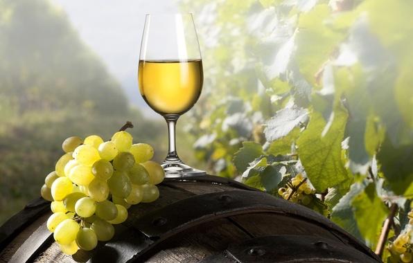 Picture wine, glass, grapes, barrel, brush