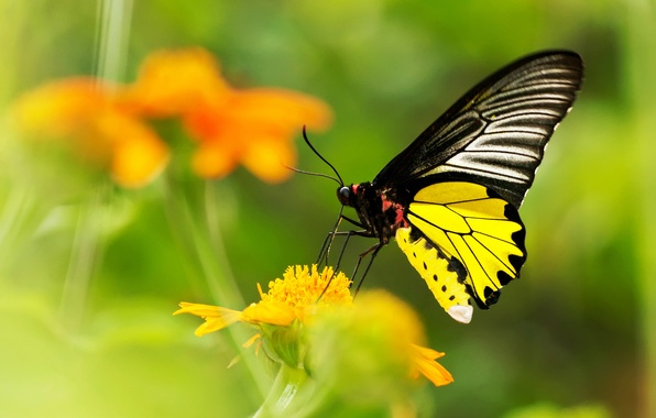Picture flower, yellow, butterfly, blur