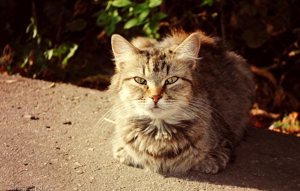 Picture autumn, cat, cats, Sunny cat