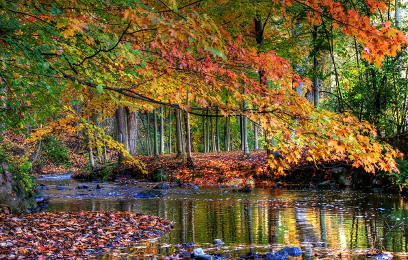 Picture autumn, forest, leaves, water, trees, stream, stones, yellow