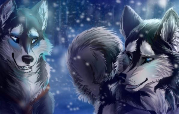 Picture winter, animals, look, snow, predators, wolves