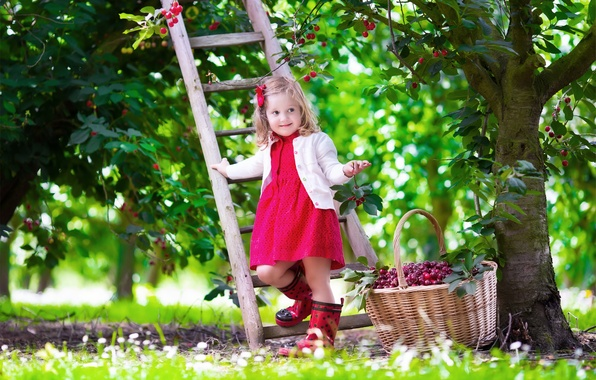 Picture summer, cherry, mood, child, garden, dress, ladder, girl, girl, summer, beautiful, pretty, garden, cherry, baby
