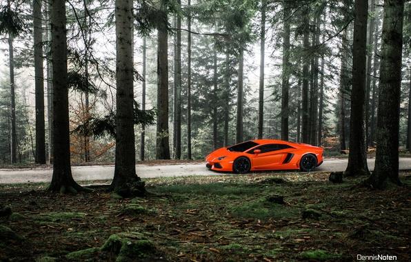 Picture forest, light, Lamborghini, Aventador