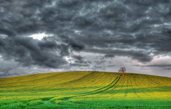 Picture field, the sky, clouds, tree, England, UK, grey