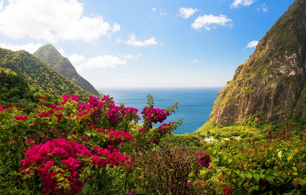 Picture sea, greens, landscape, flowers, nature, rocks, view, island, the bushes, The West India
