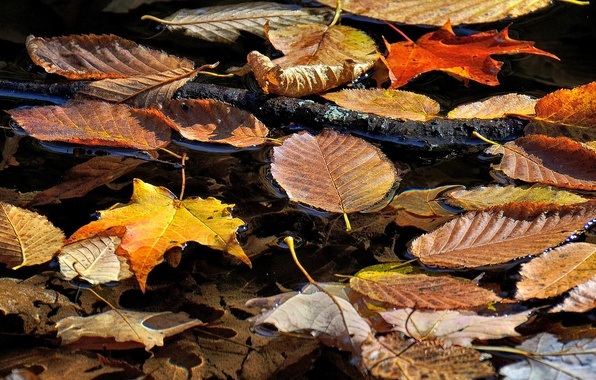Picture autumn, leaves, water, stream, branch