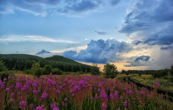 Picture road, field, the sky, clouds, landscape, nature, hill, Ivan-tea