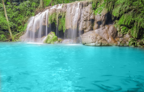Picture forest, trees, nature, river, waterfall, blue water