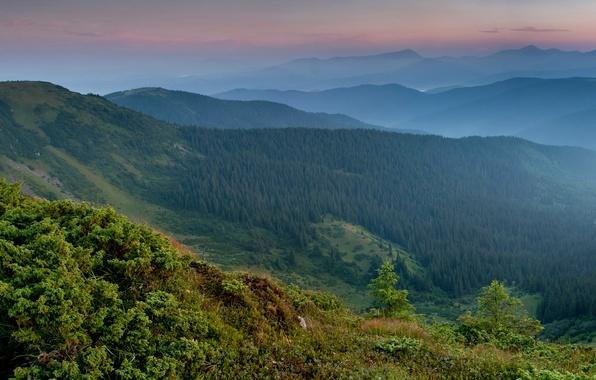 Picture forest, mountains, panorama, Ukraine, Carpathians, Transcarpathia