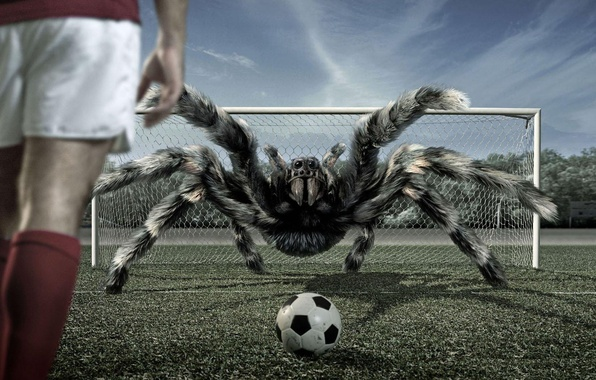 Picture football, the ball, spider, gate, tarantula