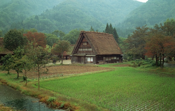 Picture field, forest, house