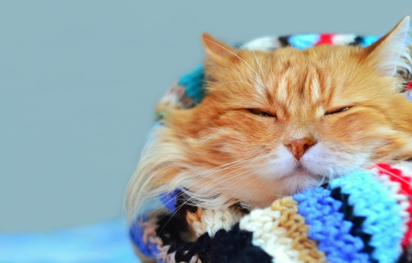 Picture cat, mustache, look, bright, stay, blur, scarf, red, muzzle, cat, Tomcat, bokeh, foxy, wallpaper., warm, …