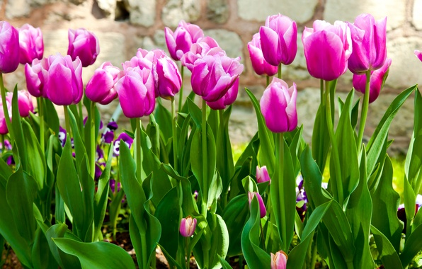 Picture leaves, flowers, stems, spring, garden, tulips, lilac