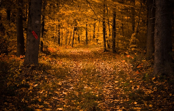 Picture forest, leaves, trees, nature, Autumn, falling leaves