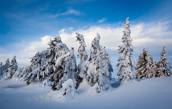 Picture winter, snow, trees, ate, Norway, the snow, Norway, Lillehammer, Nordseter Fjellpark, Lillehammer