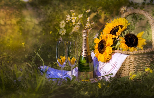 Picture summer, sunflowers, basket, bottle, glasses, champagne