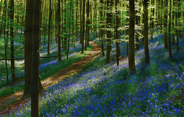 Picture forest, trees, flowers, track, path