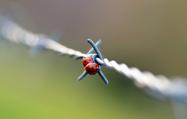 Picture macro, wire, day, barbed, ladybugs, of God