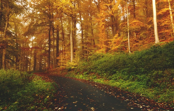 Picture grass, forest, trees, nature, autumn, leaves, woods, trail, path, fall