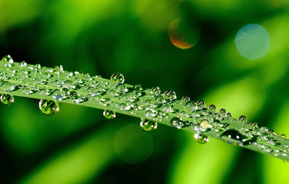 Picture greens, leaves, water, drops, macro, green, Rosa, background, green, widescreen, Wallpaper, wallpaper, leaves, leaf, widescreen, …
