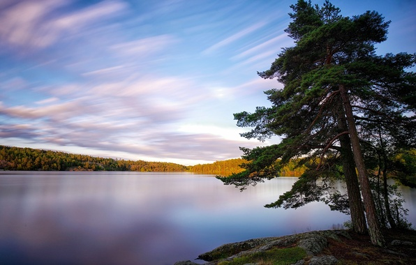 Picture trees, lake, Sweden, Sweden, Lake Källtorpssjön