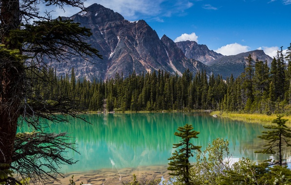 Picture forest, trees, Canada, Albert, Alberta, Canada, Jasper National Park, Rocky mountains, Jasper, Rocky Mountains, Cavell …