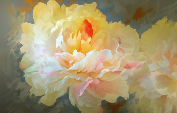 Picture flowers, petals, peony