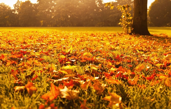 Picture autumn, grass, macro, light, trees, nature, foliage, yellow, Leaves, orange, gold