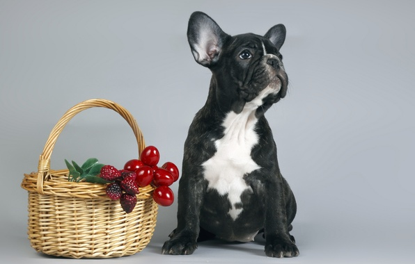 Picture basket, dog, puppy
