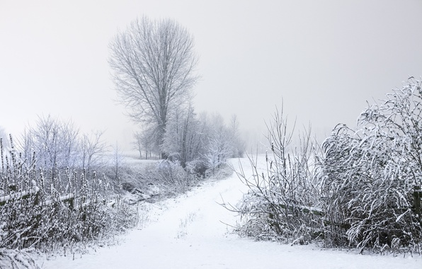 Picture winter, frost, road, trees, branches, nature, Snow, the bushes