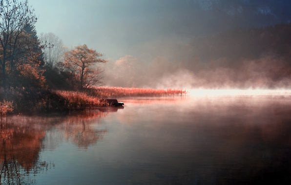 Picture autumn, nature, fog, lake, river, shore, morning, couples
