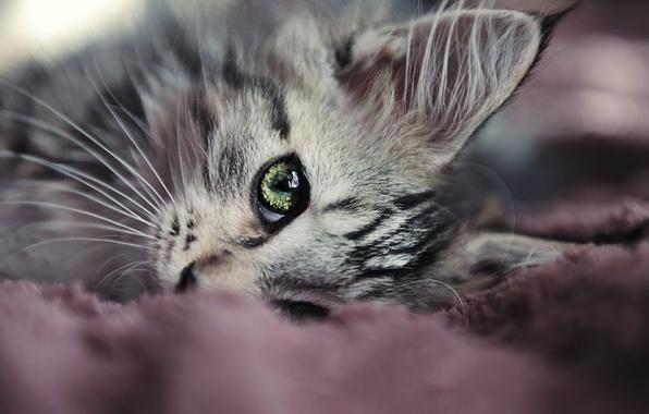 Picture cat, mustache, eyes, lies