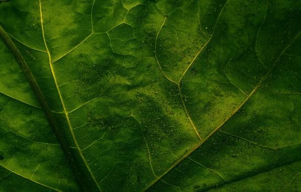 Picture macro, sheet, green, veins
