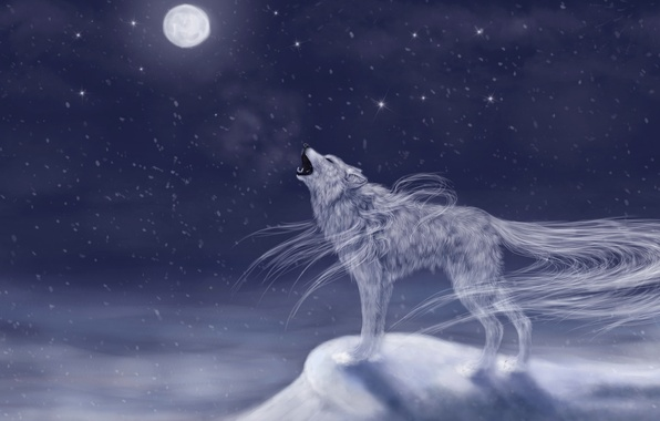 Picture cold, the sky, snow, night, animal, the moon, wolf, art, howling, vhost