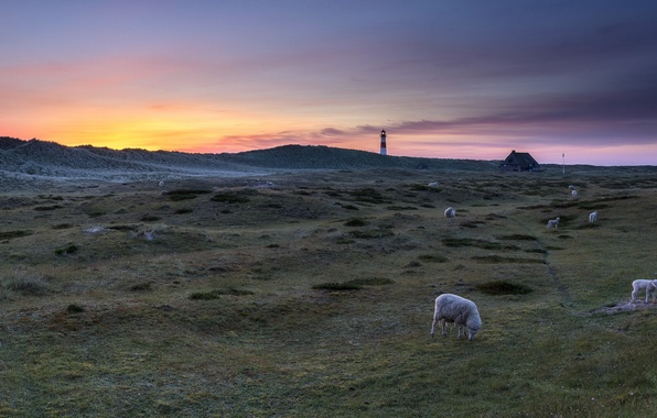 Picture landscape, sunset, lighthouse, sheep
