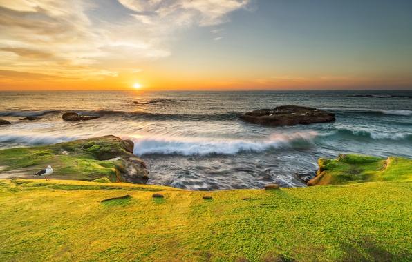 Picture sea, the sun, stones, dawn, coast, moss, Seagull, horizon, CA, surf, USA