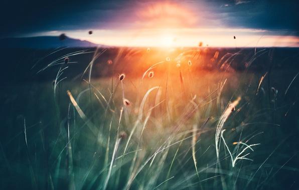 Picture grass, the sun, sunset, nature, Crimea