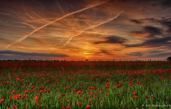 Picture field, summer, the sky, sunset, nature, Maki