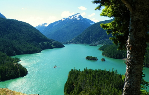 Picture trees, landscape, mountains, nature, lake, photo, top, trunk, USA, Washington Diablo