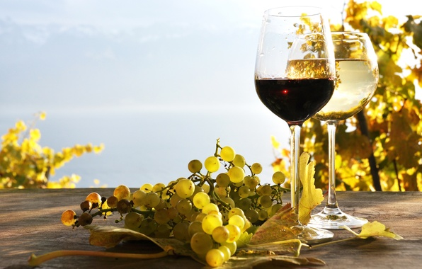 Picture leaves, table, wine, red, white, grapes, the vineyards