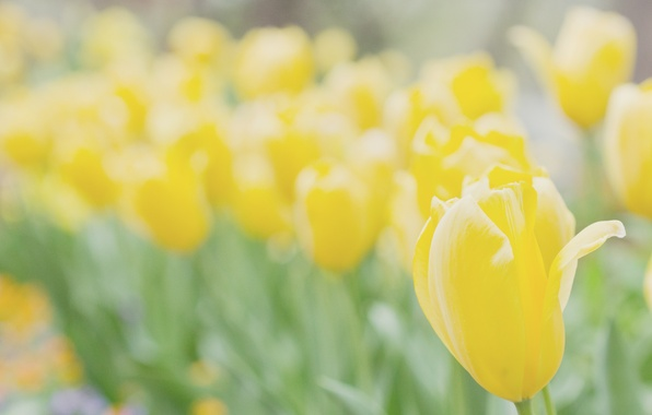Picture macro, flowers, yellow, bright, nature, background, Wallpaper, plant, flowers, wallpapers