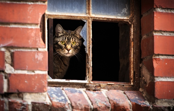 Picture cat, look, House, window