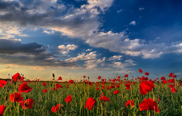 Picture field, the sky, clouds, sunset, flowers, nature, Maki