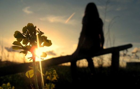 Picture the sky, plant, Sunset, silhouette