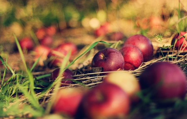 Picture grass, macro, earth, apples, apple, bokeh, bokeh, orchard