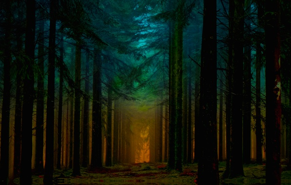 Picture Orange, Beautiful, Blue, Fantastic, Sunrise, Forest, Ligth, Beam